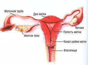 vaginalnie-rodi-s-rubtsom-na-matke